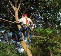 Best Forth Tree Care